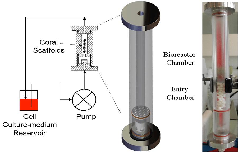 Bioréacteur développé au B2OA pour la culture dynamique de CSM